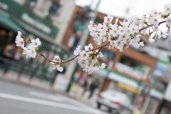 街中だって花見